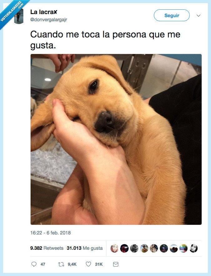 gustar,perro,persona,tocar