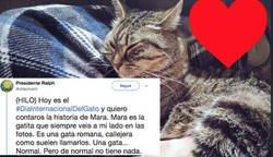 Enlace a La bonita historia sobre esta gata nos recuerda porque es tan importante adoptar y nunca comprar, por @ofdachurch