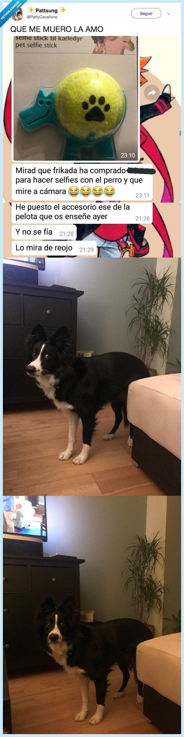 perro,sospecha juguete
