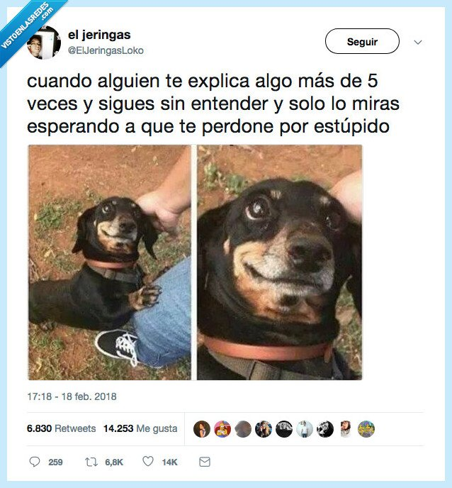 cara,entender,no,perro