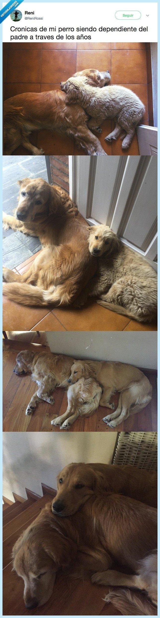 abrazar,necesitar,padre,perro