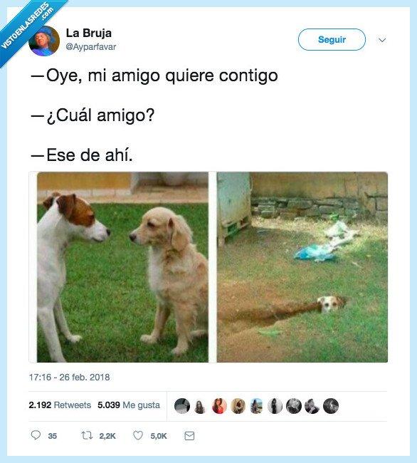 acordar,esto,perro