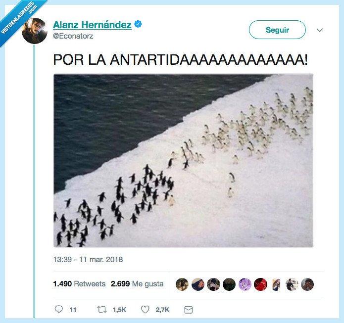 libre,lucha,pingüino