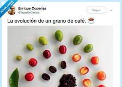 Enlace a De una hoja a la taza, por @TapasDeCiencia