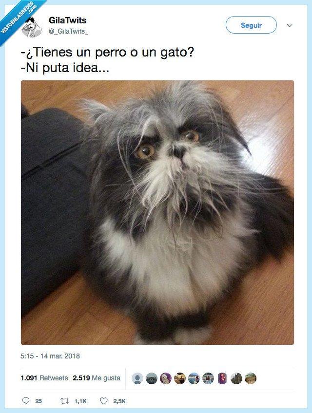 gato,no sabemos que tenemos,perro