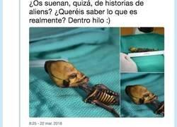 Enlace a La historia del Alien de Atacama que no te dejará indiferente, por @Mylestring