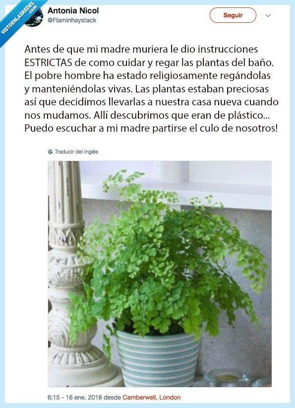 planta,plástico,tarea