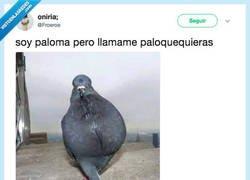 Enlace a Maldita y estúpida Paloma, por @Froeroe