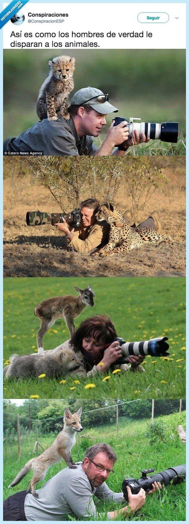 animales,disparar,manera