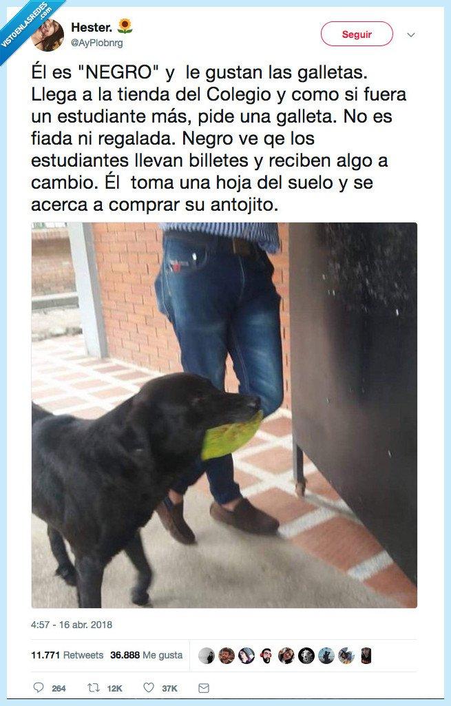 486560 - Por estas cosas los perros son lo puto más del mundo, por @AyPlobnrg