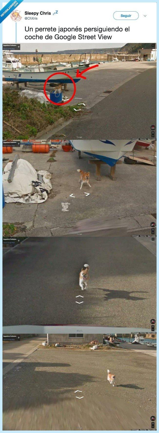 coche,correr,perro