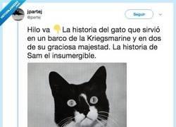 Enlace a Sam, el gato que sobrevivió a tres hundimientos @jpartej