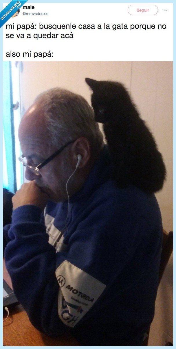 casa,gato,papa