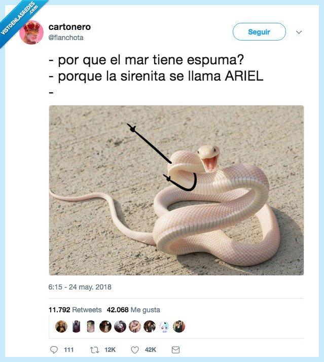 chistaaco,día,serpiente