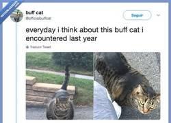 Enlace a Conoce a Buff Cat, el gato musuculado que se ha convertido en la nueva sensación de internet y fuente de memes inagotables