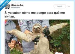 Enlace a Nota mental: nunca más invitar al oso, por @olaladefua