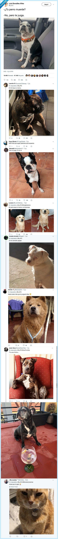gato,juzgar,perro