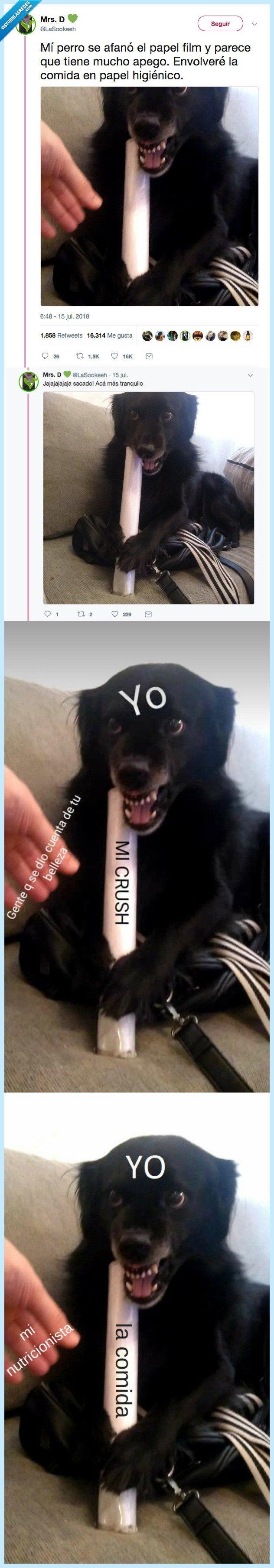 meme,moda,perro
