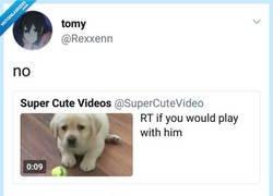 Enlace a Ea ea ea el cachorro se cabrea, por @SoyJacobecos