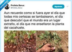 Enlace a Vale, la planta del cacahuete nos ha impactado mucho, por @Profeta_Baruc