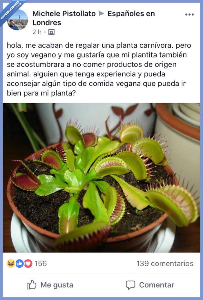 carnívora,Facebook,vegano