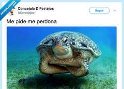 Enlace a Po no te perdono, por @Concejajala