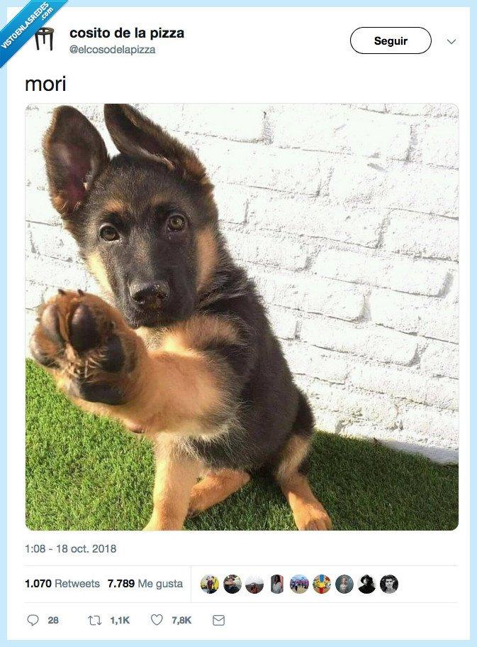choccar,pata,perro