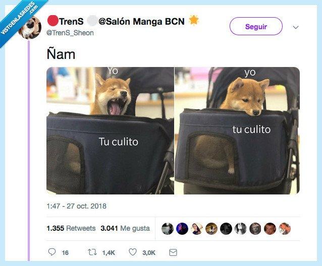 je,perro,tupulo