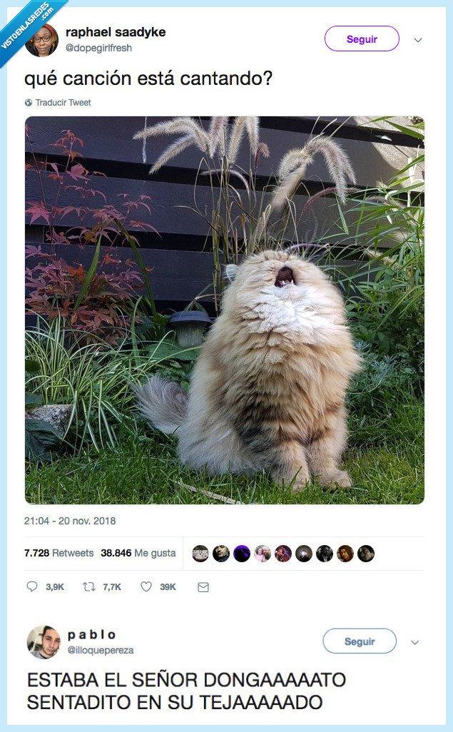 gato,marramiaumiau,sentada