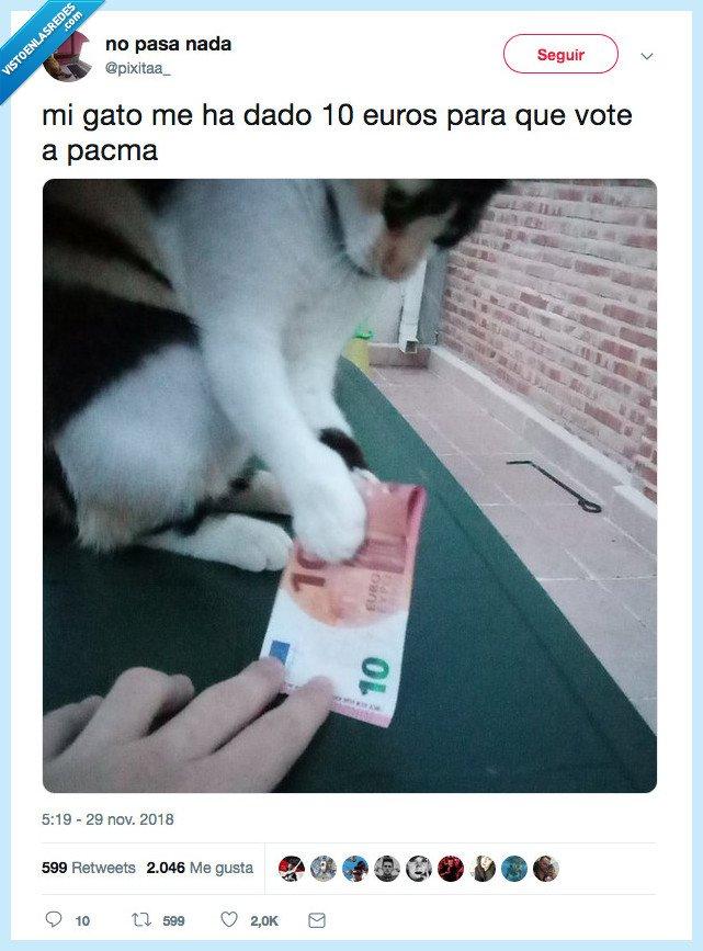 dinero,gato,pacma,votar