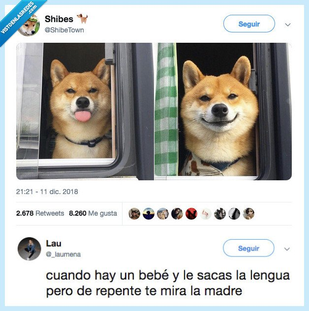 bebé,lengua,perro,yo