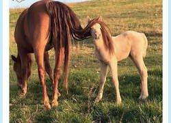Enlace a Horse Luis se la va a ganar, por@ErikaLopategui
