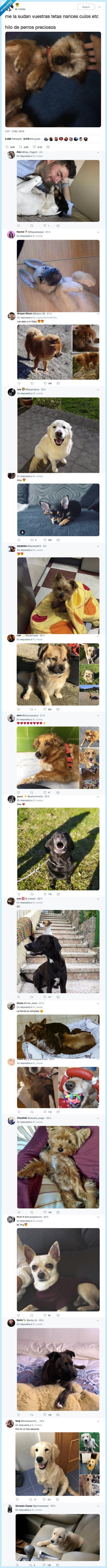 alegrar,cachorro,día,perretes,perros