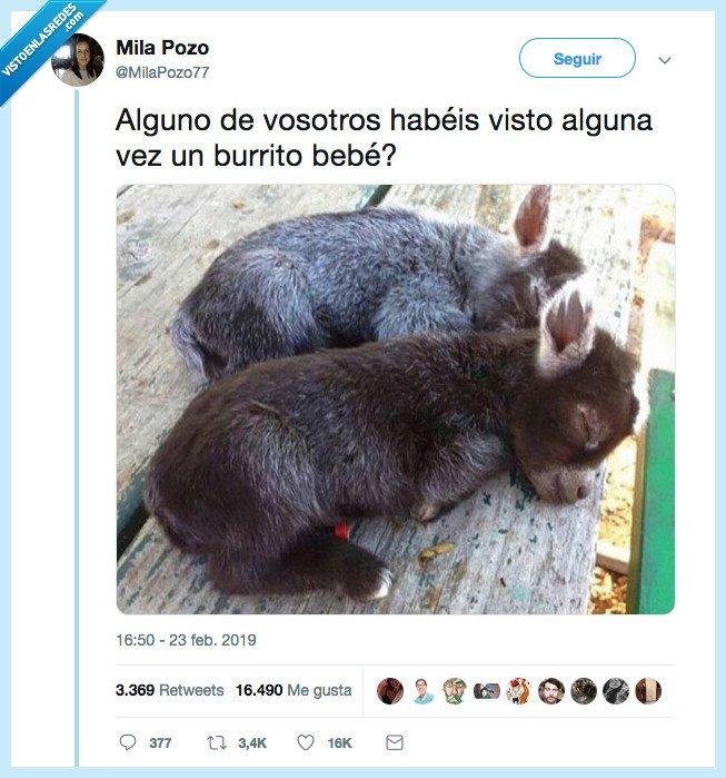 bebé,burro,holipuli,ver