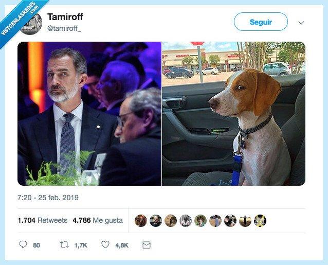 mirar,perri,rey,sospechar