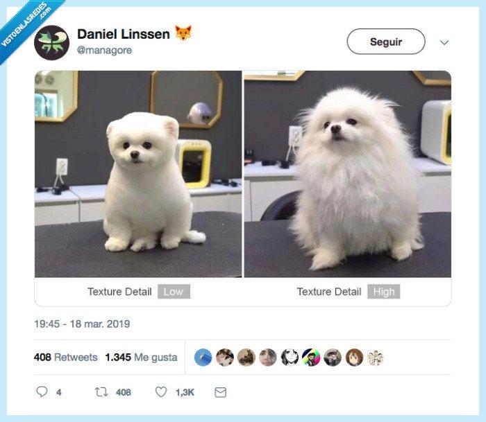gráfica,pelo,perro