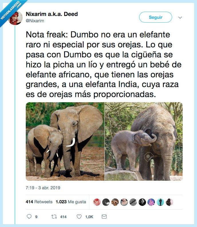 cigüeña,culpa,dumbo,holapandrisonelefantes