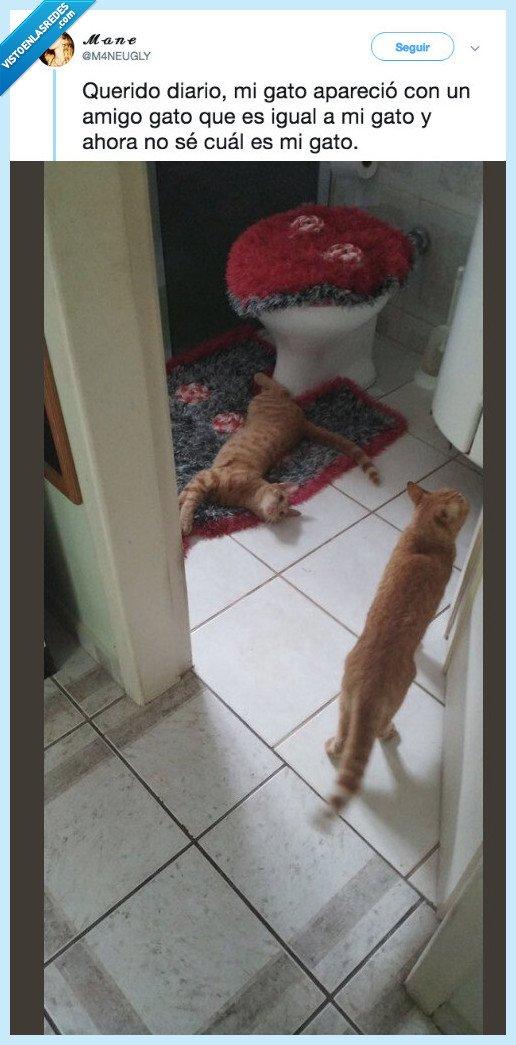 aparecer,diario,duplicar,gato
