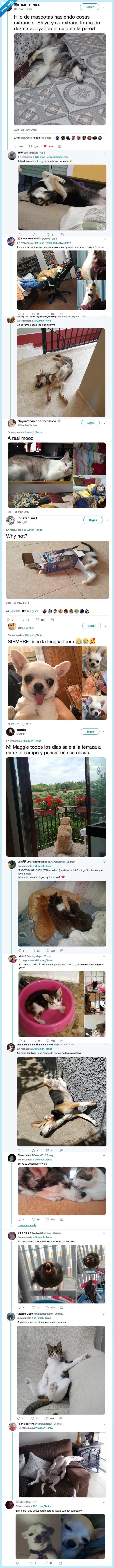 gato,hamster,mascotas,perro,twitter