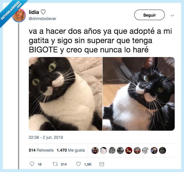 bigote,sir gato,sr gato