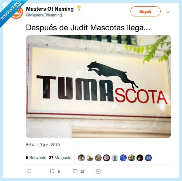 mascota,naming,veterinario