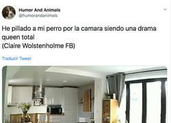 Enlace a Pilla a su perrete siendo una DRAMA QUEEN total por la camara de vigilancia, por @humorandanimals