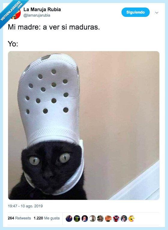 crocs,gato,madre,madurar,zapatilla