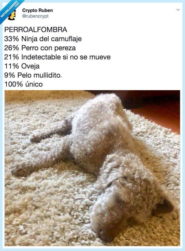 100x100unico,alfombra,camuflaje,MadeToBeUnique,Maxibon,perro