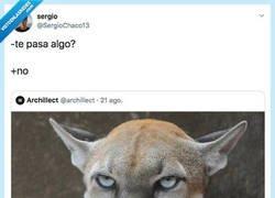 Enlace a Su cara no dice lo mimso que su boca, por @SergioChaco13