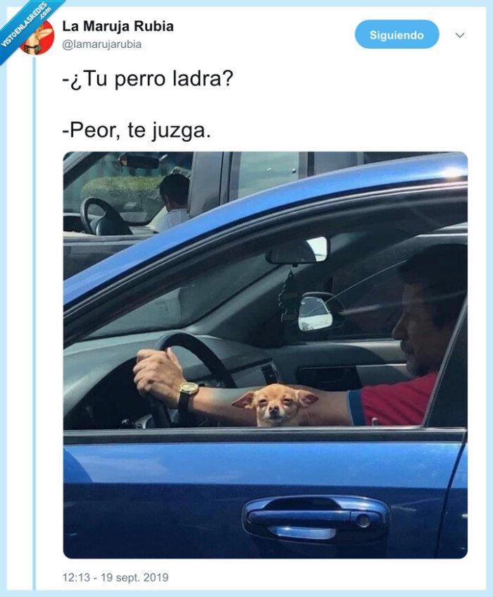 coche,juzgar,perro