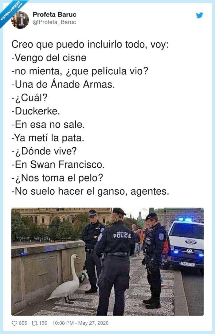 detención,duck,ganso,patos,policía