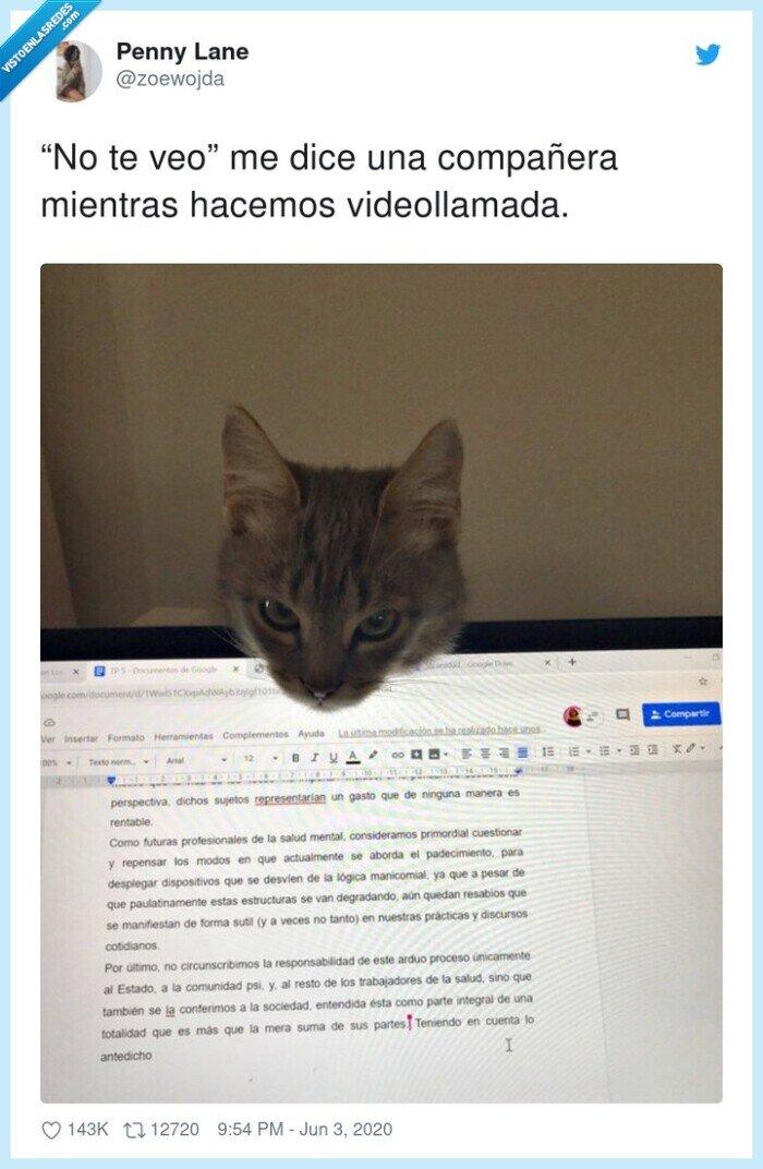 compañera,gato,ordenador,videollamada
