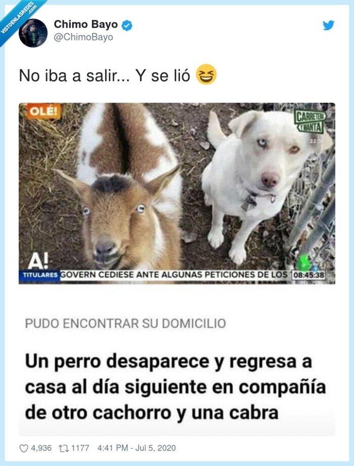 cabra,cachorro,fiesta,perro