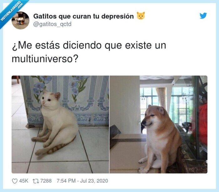 gato,meme,multiuniverso,perro
